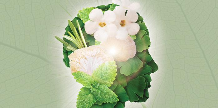 2 Herbal Brain Foods to Nourish & Refresh Your Cognitive Function