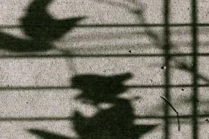 Seeing Shadows